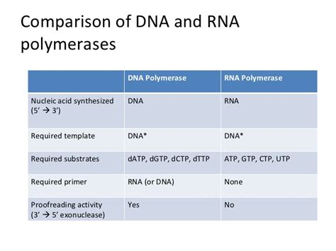 protein vs enzyme enzymes and proteins in dna replication