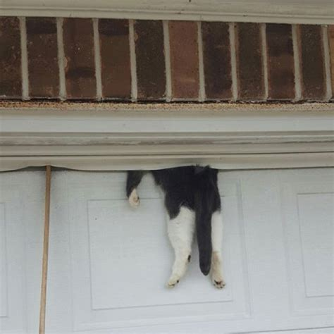 How To Fix A Stuck Garage Door cat stuck between garage door and wall somehow survives