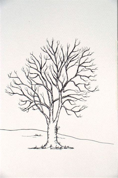 b tree drawing tool ash tree drawing search school for