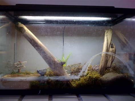 frog habitat aquarium  aquarium ideas
