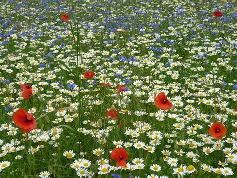 prato fiorito in inglese blogarden dove vi racconto la idea di giardino