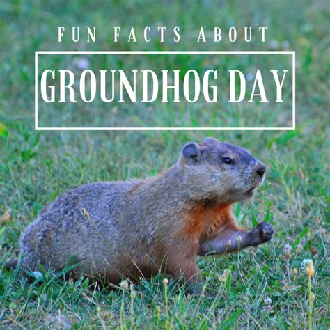 groundhog day groundhog facts for about groundhog day coloradomoms