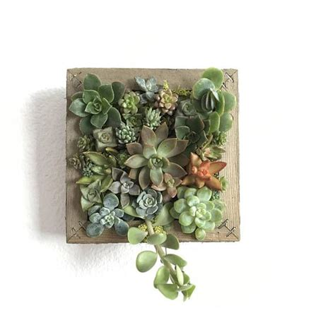 best 25 succulent frame ideas on succulent