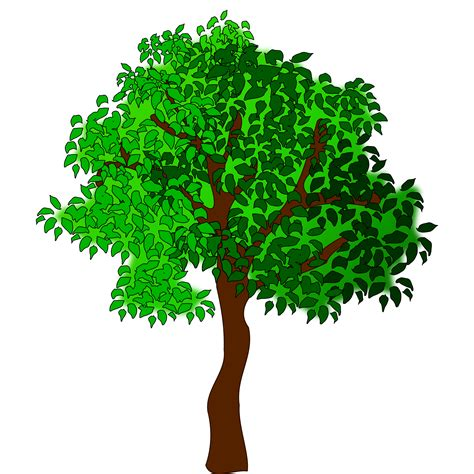 clip trees top 88 trees clip free clipart image