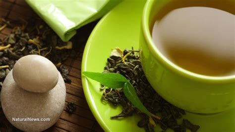 Green Tea Helps In The Fight Against Disease by Herbs News Articles And Information