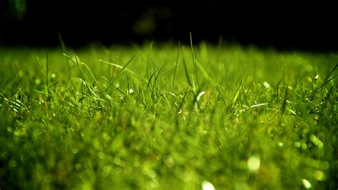 wallpaper hd green grass full hd wallpaper grass field green blurry desktop