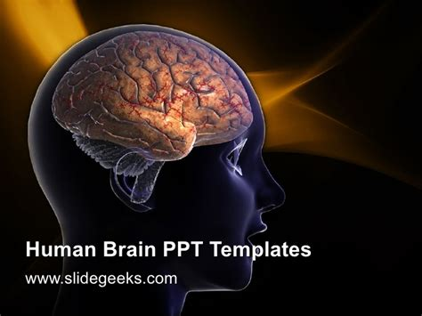 powerpoint templates brain human brain ppt templates