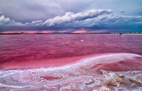 pink lake pretty pink lakes across the globe 54 pics