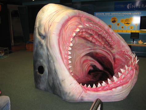 Home Design Home Builder by Megalodon Shark Head Exhibition And Display 3