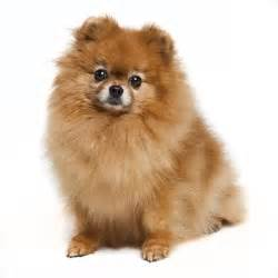 We stock a great selection of dog beds for pomeranians the dog beds