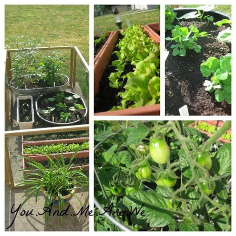patio vegetable garden containers container vegetable garden outside spaces