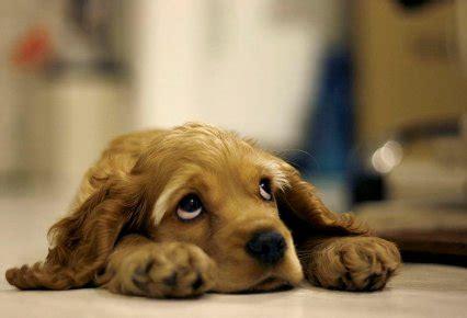mascotas para un piso qu 233 mascota tener en un piso peque 241 o soovil