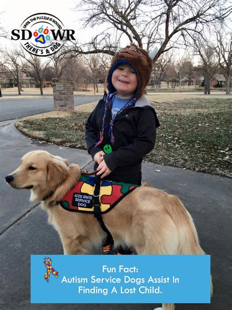 can dogs autism 25 best ideas about autism service dogs on service dogs autism services