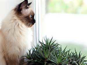 are trees toxic to cats plants toxic to cats and dogs petfinder