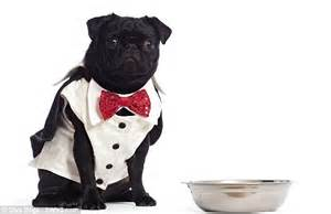 pug dinner set how to make your a put it in a pram and paint its nails city high flier