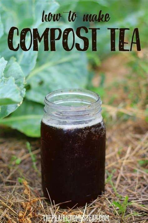how to make compost tea gardening tips compost tea
