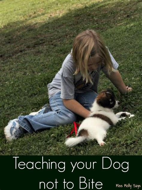 how to teach a puppy not to bite teaching your not to bite miss molly says
