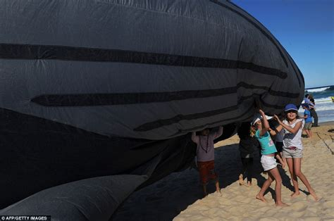 Boneka Ikan Matahari berbagi pengetahuan foto paus terbang dari australia