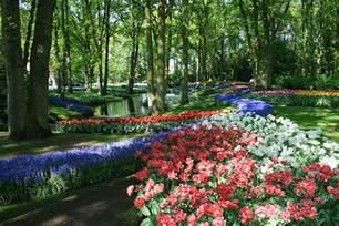 Flowers From The Garden Keukenhof