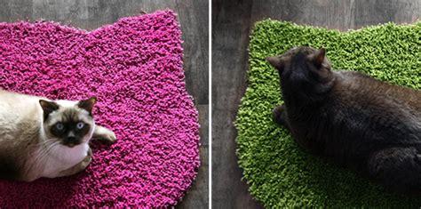 cat pooping on rug cat poops on rug rugs ideas