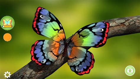 colorful butterflies paint me a butterfly lets create colorful butterflies