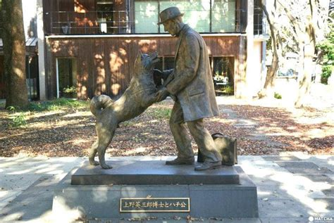 meet hachiko 5 places related to japans famous loyal dog
