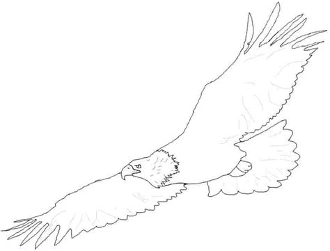 soaring eagle coloring page soaring eagle page coloring pages