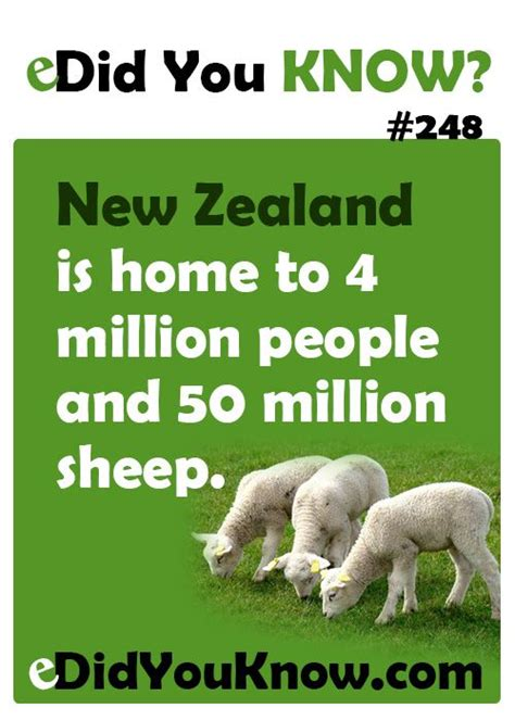 new year sheep facts new zealand is home to 4 million and 50 million