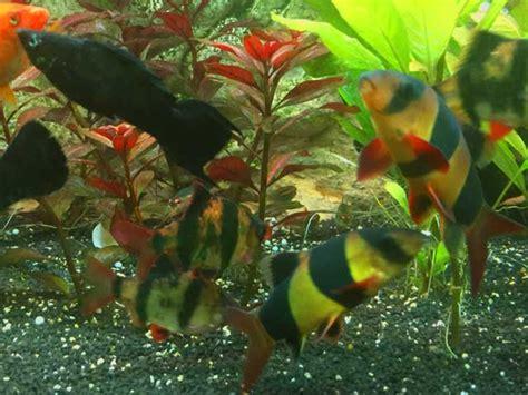fische archive seite  von  aquarium perfekt
