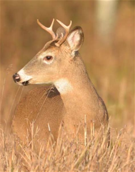 small buck ground blind offers protection from the elements deer