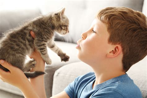 5 absolutely wonderful reasons people love cats
