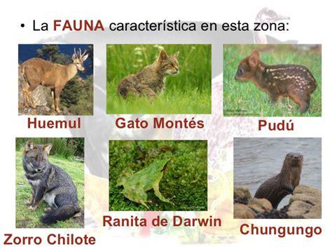 fotos animales zona sur de chile flora y fauna de chile
