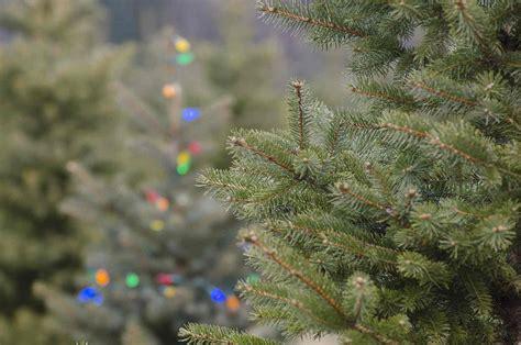5 tricks to keep your christmas tree fresher longer