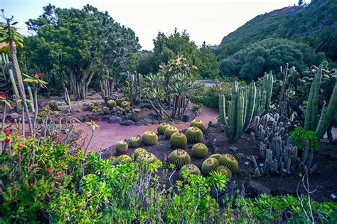 jardin botanico gran canaria las palmas de gran canaria una ciudad que da que hablar