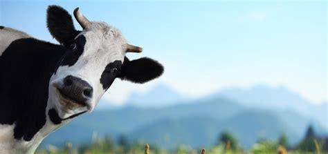 sound  ringtone downloads animal ringtones