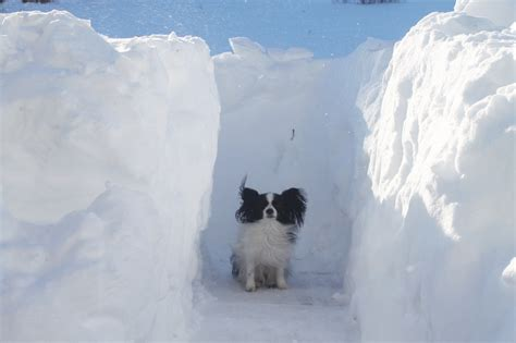 biggest blizzard bad blizzards www pixshark com images galleries with a