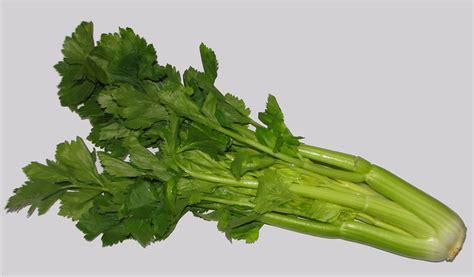 comment cuisiner le celeri branche c 233 leri branche crue cœur de c 233 leri crue 100g 130 g cuit