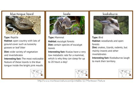 printable animal fact cards australia oceania resource pack montessori nature