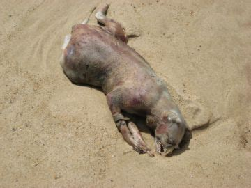 exposure is and shell promptly tell you its skin cancer can you identify this expired animal true strange stuff