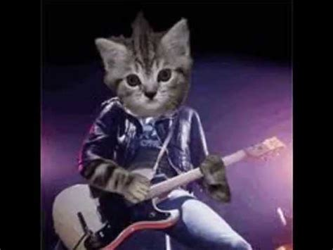 imagenes de viernes rockeros gatos rockeros youtube