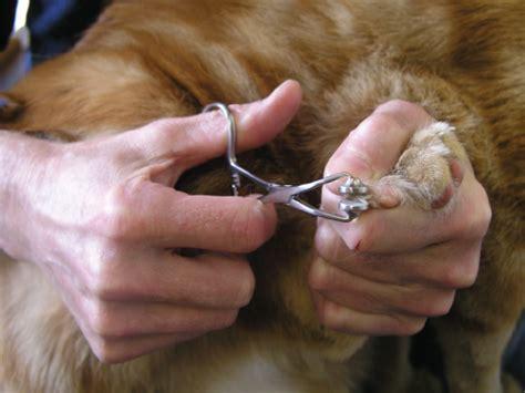 can dogs be declawed feline declaw forceps 4 quot jorgensen labsjorgensen labs