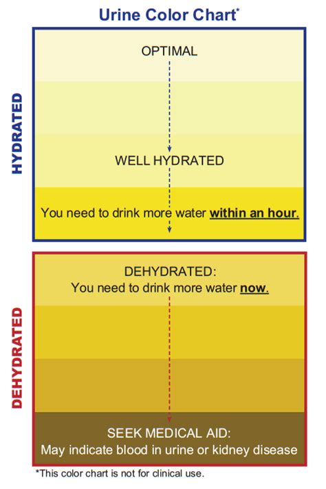 urine color meaning colors in the urine and their meaning healthy tactic