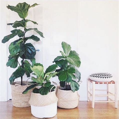 indoor plant ideas 15 indoor plant display ideas that are borderline genius