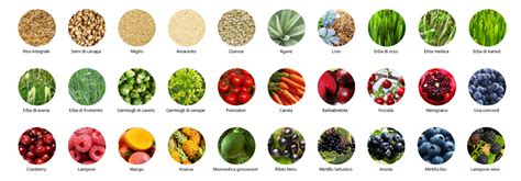alimento biologico juvo green protein alimento biologico vegetale crudo