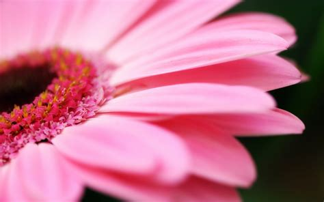 Pictures Of Pink Flowers - black and white wallpapers pink flower wallpaper