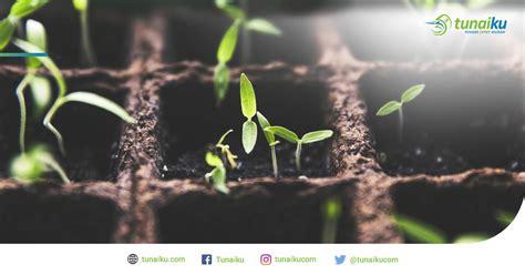 Berkebun 26 Jenis Tanaman 5 jenis tanaman rumah yang bermanfaat bahkan bisa dijadikan bisnis swara