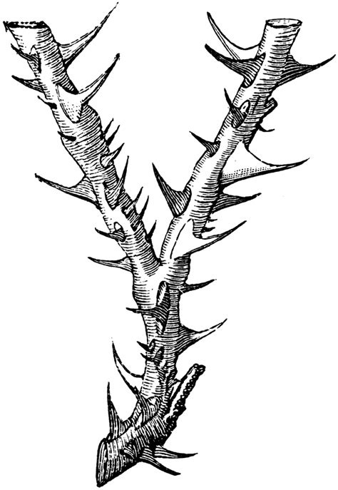 Thorny Letter Y | ClipArt ETC
