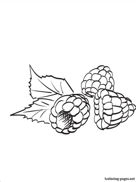 raspberry coloring page coloring pages