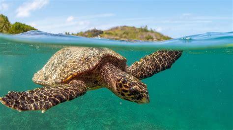 sea turtle ls 10 endangered ocean species and marine animals fun