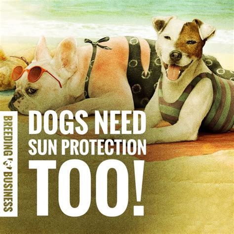 sunblock for dogs best sunscreen get the right sunblock for dogs